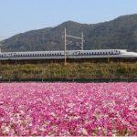 新幹線の動画なら「だいすき新幹線」がおすすめ!子供向けだが大人もOK!