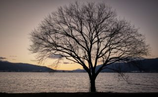 湖畔の樹見出し